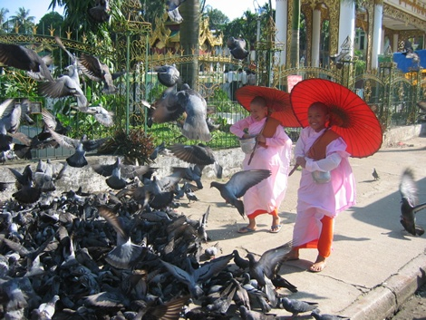 nuns with pigeons